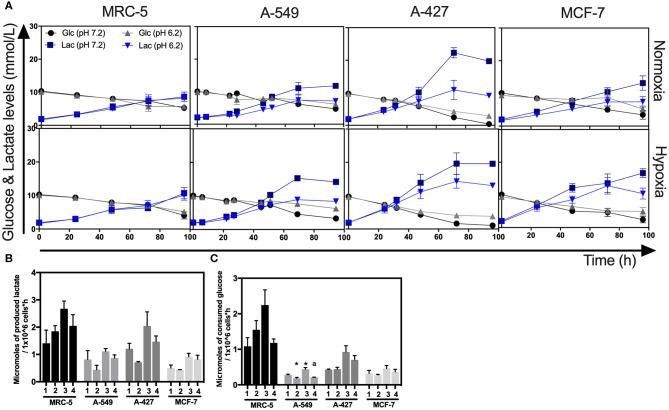 Glucose and lactate metabolism in tumor and fibroblast cells. (A) Kinetics of glucose and lactate levels from cultures of MRC-5, A-549, A-427, and MCF-7 followed through 96 h, using RPMI-1640 at pH 7.2 or pH 6.2 under normoxia (21% O 2 ) or hypoxia (2% O 2 ). (B) Specific rate of lactate production obtained during exponential phase of growth of tumor and fibroblast cells. (C) Specific rate of glucose consumption obtained during exponential phase of growth of tumor and fibroblast cells. Bars represent mean + SEM. * p