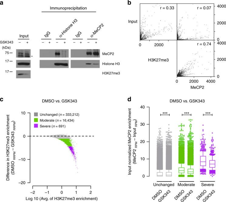 MeCP2 binding to chromatin is regulated by the levels of H3K27me3. a SH-SY5Y cells treated with either DMSO or GSK343 were immunoprecipitated with either histone H3 or MeCP2 antibody. Samples of input were analyzed with Western blot for MeCP2, histone H3 and H3K27me3. IgG and immunoprecipitates were analyzed with Western blot for MeCP2 and histone H3. Star indicates a non-specific band. Source data are provided as a Source Data file. b Scatter plots show the correlation between H3K27me3 ChIP-seq signal and MeCP2 enrichment from SH-SY5Y cells (binning size = 1000 bp). N = 2 (WT) from biologically independent experiments. c Differences of exogenous reference normalized H3K27me3-enrichment between GSK343 treatment and control DMSO are plotted. N = 2 (per treatment) from biologically independent experiments. The x axis corresponds to the average of H3K27me3 signals in both GSK343 treated and DMSO control; the y axis corresponds to the difference of H3K27me3 signal between GSK343 treated and DMSO control SH-SY5Y cells. Based on the H3K27me3 difference, loci are categorized as unchanged (gray), moderate (green) or severe (purple). d MeCP2 enrichment of DMSO or GSK343-treated samples, separated by groups defined in c . N = 2 (per treatment, DMSO vs GSK343) from biologically independent experiments. n = 333,212, p