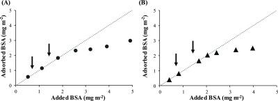 Adsorption isotherms of BSA on ferrihydrite (A) and goethite (B). The experiments were conducted at pH 4.0 in 0.01 M NaCl for 24 h. The data are compared with a 1:1 line (dotted). Arrows indicate the total BSA concentrations added in the proteolysis experiments.