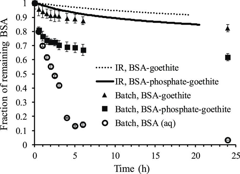 Proteolysis of goethite-associated BSA at 1.4 mg BSA m –2 , with or without coadsorbed phosphate, determined from either batch or IR experiments. The proteolysis was measured as the decrease of the intensity of the BSA peak in SEC ( cf. Figure 2 B,C) and the amide II band in the batch and IR experiment, respectively. All values were normalized against the initial value ( t = 0). The proteolysis of aqueous BSA at a concentration of 100 mg L –1 is shown for comparison. All experiments were performed at pH 4.0 in 0.01 M NaCl, and the protease concentration was 5 mg L –1 . Error bars represent standard deviations ( n = 3 for goethite-associated BSA and n = 2 for aqueous BSA).