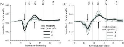 Difference in SEC chromatograms of the phosphate-desorbed fraction of ferrihydrite-associated BSA (A) and goethite-associated BSA (B) in the presence of coadsorbed phosphate after 3 h proteolysis reaction. The experiments were performed at 0.7 mg BSA m –2 and pH 4.0 in 0.01 M NaCl, and the protease concentration was 10 mg L –1 . The total added phosphate concentrations were 1.0, 2.0, and 5.0 μmol m –2 , which are indicated by numbers in the figure legends. The difference chromatograms shown are obtained by subtraction with a control without phosphate addition. The horizontal dotted lines indicate the 0-level. The shaded bands represent standard deviations ( n = 2). The arrows indicate the direction of change, and the vertical dotted lines represent the molecular masses (in Da) of peptide standards.