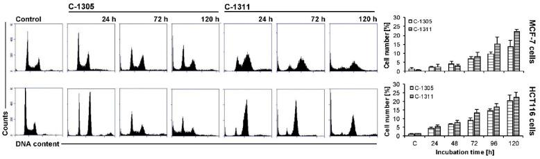 Cell cycle distribution of MCF-7-EV and HCT116-EV cells. Cells were untreated (control) or treated with IC 80 dosage for MCF-7 and IC 90 for HCT116 cells of C-1305 or C-1311 compounds for the times indicated and subjected to propidium iodide staining and flow cytometry as described in Materials and Methods. Histograms show number of cells ( y -axis) versus DNA content ( x -axis) and are representative of at least three experiments for each condition. Bar graphs show data quantitation with percentage of cells with less than 2N DNA (sub-G1 fraction).