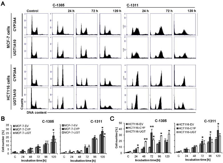 Cell cycle distribution of MCF-7-CYP3A4, MCF-7-UGT1A10, HCT116-CYP3A4 and HCT116-UGT1A10 cells. Cells were untreated (control) or treated with C-1305 or C-1311 (IC 80 for MCF-7 cells, IC 90 for HCT116) for the times indicated and subjected to propidium iodide staining and flow cytometry as described in Materials and Methods. ( A ) Histograms show number of cells ( y -axis) versus DNA content ( x -axis) and are representative of at least three experiments for each condition. ( B , C ) Bar graphs show data quantitation with percentage of cells with less than 2N DNA (sub-G1 fraction): three types of MCF-7 ( B ) and HCT116 ( C ) cells treated with C-1305 or C-1311. Results are expressed as mean ± SEM ( n ≥ 3). Significant differences in cell percentages between control, stably transfected with EV cells and UGT1A10- or CYP3A4-transfected are indicated as follows: * p ≤ 0.05; ** p ≤ 0.001.
