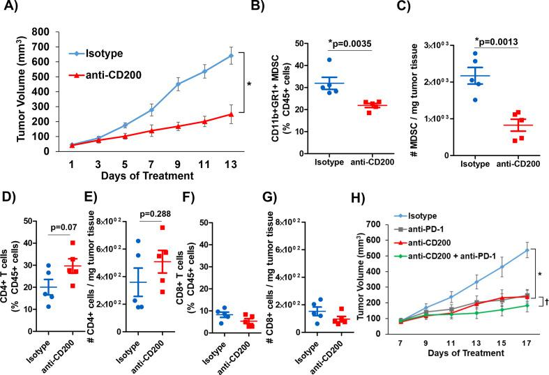 CD200 antibody blockade elicits antitumor response. KPC-derived MT5 tumor were subcutaneously injected into C57BL/6 mice. (A) Mice were treated with 200 µg/mouse of CD200 or isotype control antibodies 3× a week (n=5 mice/group). Intratumoral flow cytometry staining (percent of CD45+ cells and number per mg of tumor tissue) for (B) and (C) MDSC (CD11b+GR1+), (D) and (E) CD4+ T cells, (F) and (G) CD8+ T cells. (H) C57BL/6 mice were inoculated subcutaneously with MT5 tumor cells and were treated once palpable. MT5 tumor-bearing mice were treated with 200 µg/mouse of anti-CD200, PD-1, or isotype control antibodies 3× a week (n=5 mice/group). Mean±SD; * and †=p