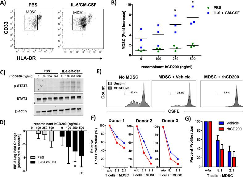 CD200 enhances the cytokine-driven differentiation and suppressive activity of MDSC in vitro. Normal donor PBMC were cultured for 7 days with 10 ng/mL of IL-6 and 10 ng/mL of GM-CSF and stained by flow cytometry for the percentage of MDSC (CD11b+CD33+HLA-DR lo ). (A) Representative flow cytometry dot plots from unstimulated or IL-6/GM-CSF stimulated PBMC after 7 days of differentiation. (B) During differentiation, cells were cultured in the presence of recombinant human CD200 protein (rhCD200). (C) Healthy donor PBMC were stimulated with 10 ng/mL of IL-6 and GM-CSF for 30 min with increasing concentrations of rhCD200 protein. Cell lysates were analyzed for STAT3 phosphorylation (p-STAT3) with β-actin as a loading control. (D) Healthy donor PBMC were stimulated with 10 ng/mL of IL-6 and GM-CSF with increasing concentrations of rhCD200 protein for 2 hours. RNA was isolated and expression of IRF-8 was analyzed by real-time PCR. (E) PBMC from healthy donor blood was stimulated with 10 ng/mL of IL-6 and GM-CSF to differentiate cells into MDSC for 5 days. Cells were then cultured with vehicle control or 200 ng/mL rhCD200 for 48 hours. MDSC were then cocultured with autologous CFSE-labeled T cells stimulated. T cells were stimulated with CD3/CD28 beads and proliferation was measured after 4 days by CFSE dilution. (F) Individual donor T-cell proliferation and (G) quantification across all donors. Mean±SD; *p