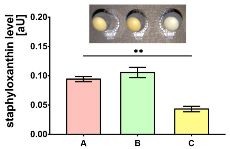 Staphyloxanthin level measurements produced by S. aureus Newman strain isolated from different modifications of the Mueller-Hinton agar: non-supplemented (control medium A); supplemented with 1% ( v/v ) Tween 80 (medium B); supplemented with 1% ( v/v ) Tween 80 and trans -anethole at subinhibitory concentration—MIC 50 (medium C). Data are shown as the mean ± SD. ** p