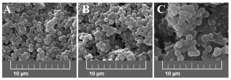 Scanning electron microscope (SEM) images at 5.00 kx of S. aureus Newman strain isolated from different modifications of the Mueller-Hinton agar: non-supplemented (control medium A ); supplemented with 1% ( v/v ) Tween 80 (medium B ); supplemented with 1% ( v/v ) Tween 80 and trans -anethole at subinhibitory concentration—MIC 50 (medium C ).
