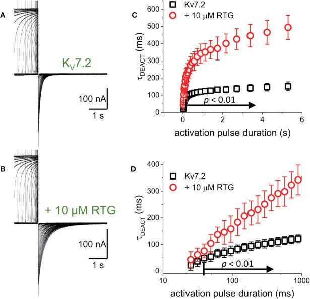 To determine whether the decrease in the rate of deactivation was a unique property of the heteromeric K V 7.2/K V 7.3 channel. (A, B) K + -current recordings from oocytes expressing K V 7.2 in the absence and presence of 10μM Retigabine (RTG). (C) τ DEACT was plotted as a function of t PULSE for the homomeric K V 7.2. It was found that the slow down of the deactvation kinetics still occurs when K V 7.2 was expressed alone, suggesting that the hysteretic behavior of these K V 7 channels was not a property emerging from heteromerization ( n = 5). (D) τ DEACT -t PULSE plots in C, replotted with a logarithmic t PULSE to highlight the behavior of τ DEACT at short t PULSE values.