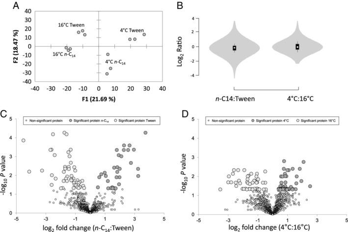A. Principle component analysis of replicate Oleispira antarctica RB‐8 proteomes during growth on tetradecane ( n ‐C 14 ) and the non‐hydrocarbon control Tween 80 (Tween) at 4°C and 16°C based on normalized spectral counts for proteins. B. Violin plots of normalized LC–MS/MS spectral counts showing the distribution of detected proteins in O . antarctica RB‐8 during growth on different substrates; n ‐C 14 versus Tween (left; n ‐C14:Tween); and different temperature; 4°C versus 16°C (right; 4°C: 16°C). C and D. Volcano plots of normalized LC–MS/MS spectral counts comparing O . antarctica RB‐8 protein abundance during growth on different substrates; n ‐C 14 versus Tween (left; n‐ C 14 : Tween) and different temperatures; 4°C versus 16°C (right; 4°C:16°C). Larger data points (light and dark grey) represent differentially expressed proteins with P‐ values below 0.05.