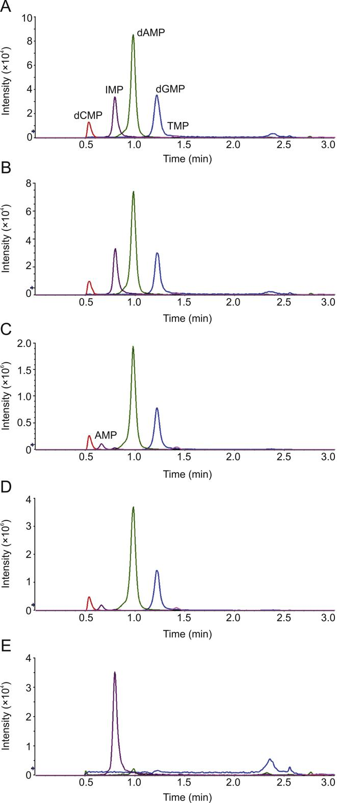 Representative chromatograms in UPLC-MSMS analysis: (A) 20 ng/mL equimolar mixture of the 4 deoxyribonucleotides; (B) 20 ng/mL CT DNA after nuclease P1 digestion; (C) 100 μg/mL CT DNA spiked with 100 μg/mL ribonucleotide equimolar mixture, after nuclease P1 digestion (200-fold diluted before injection); (D) DNA isolated from mouse tumor, after nuclease P1 digestion (200-fold diluted before injection); (E) 20 ng/mL CT DNA after DNase I digestion.
