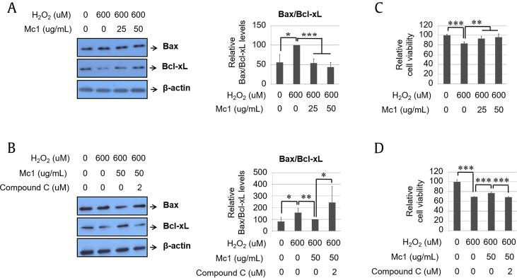 Ginsenoside Mc1 exhibited a protective effect after the treatment of H9c2 cells with hydrogen peroxide (H 2 O 2 ). (A and B) Cells were preincubated with ginsenoside Mc1 (25 or 50 μg/mL) or ginsenoside Mc1 plus compound C (2 μM) for 24 h and then stimulated with H 2 O 2 (600 μM) for 2 h. Bax and Bcl2 levels were determined by Western blotting. (C and D) H9c2 cells were pretreated with ginsenoside Mc1 or ginsenoside Mc1 plus compound C for 24 h and then stimulated with H 2 O 2 for 4 h. Cell viability was measured using an EZ-CYTOX kit. The mean ± standard deviation was obtained from 3 separate experiments [*, p