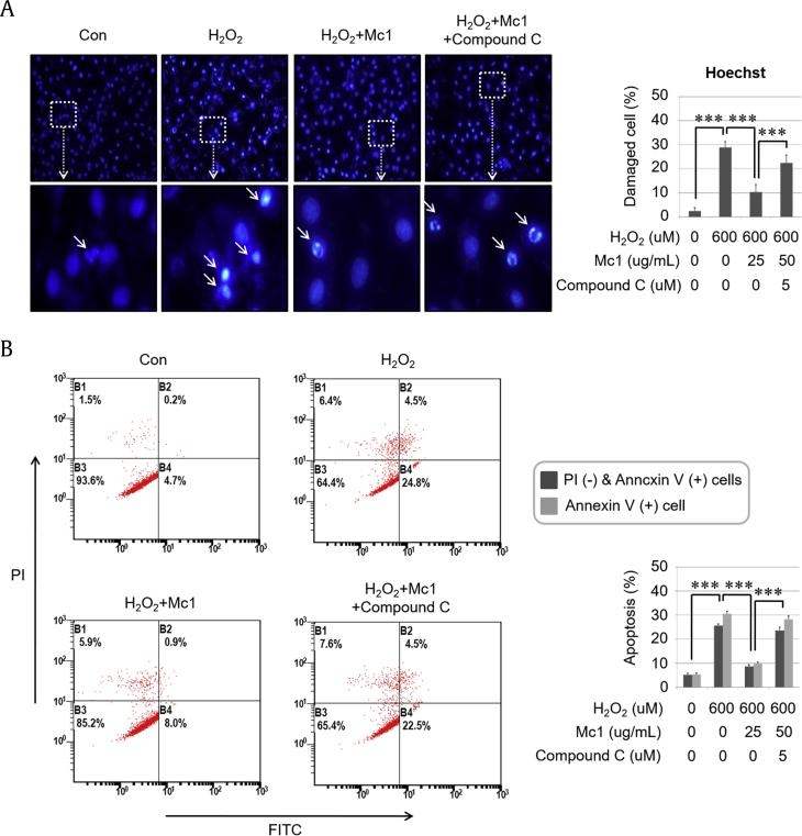 Ginsenoside Mc1 inhibited hydrogen peroxide (H 2 O 2 )– induced apoptotic events in H9c2 cells. (A) Cells were preincubated with ginsenoside Mc1 (50 μg/mL) or ginsenoside Mc1 plus compound C (2 μM) for 24 h and then stimulated with H 2 O 2 (600 μM) for 2 h. The shape of the nucleus was determined by Hoechst staining. White arrows indicate DNA-damaged cells. (B) H9c2 cells were pretreated with ginsenoside Mc1 or ginsenoside Mc1 plus compound C for 24 h and then stimulated with H 2 O 2 for 4 h. The rate of apoptosis was determined using annexin V/propidium iodide (PI) double staining and flow cytometry. The mean ± standard deviation was obtained from 3 separate experiments [***, p