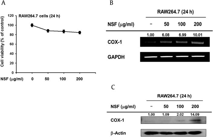 Effects of NSF on cell viability and COX-1 expression in RAW264.7 cells. (A) RAW264.7 cells were treated with NSF (0-200 μg/ml) for 24 h, and cell viability was determined by MTT assay. (B) RAW264.7 cells were treated with NSF (0-200 μg/ml) for 24 h, and the mRNA levels of COX-1 and GAPDH were determined by RT-PCR. (C) Levels of COX-1 and β-actin in whole cell lysates of RAW264.7 cells treated with NSF were determined by immunoblotting. Band intensity was measured by ImageJ. COX-1, cyclooxygenase-1; GAPDH, glyceradehyde-3-phosphate dehydrogenase; NSF, nonsaponin fraction; RT-PCR, reverse transcription polymerase chain reaction.