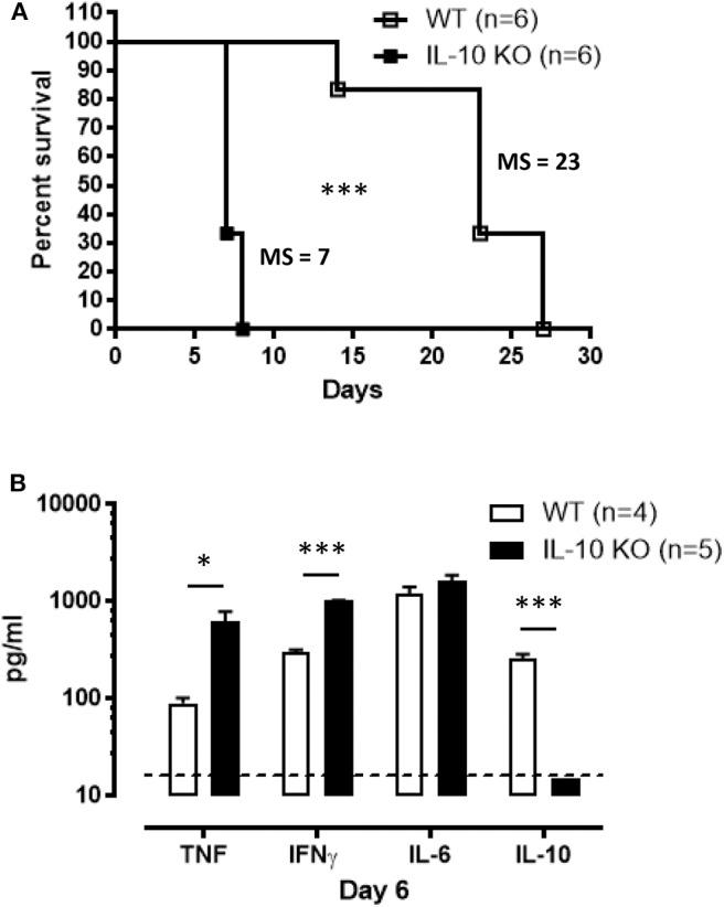 Survival and inflammation profile of <t>IL-10-deficient</t> mice inoculated with T. brucei infected tsetse fly. (A) Survival of WT and IL-10-deficient mice after T. brucei infection via tsetse fly, where the median survival (MS) of each group is indicated in days. Data are represented as mean of at least 6 mice per group ± SEM and are representative of 2 independent experiments. (B) Cytokine levels were measured by ELISA in plasma of infected WT and IL-10-deficient mice at 6 days p.i. Data are represented as mean of at least four mice per group ± SEM, where * p ≤ 0.05, *** p ≤ 0.001, and are representative of three independent experiments. The dashed line represents the detection limit.