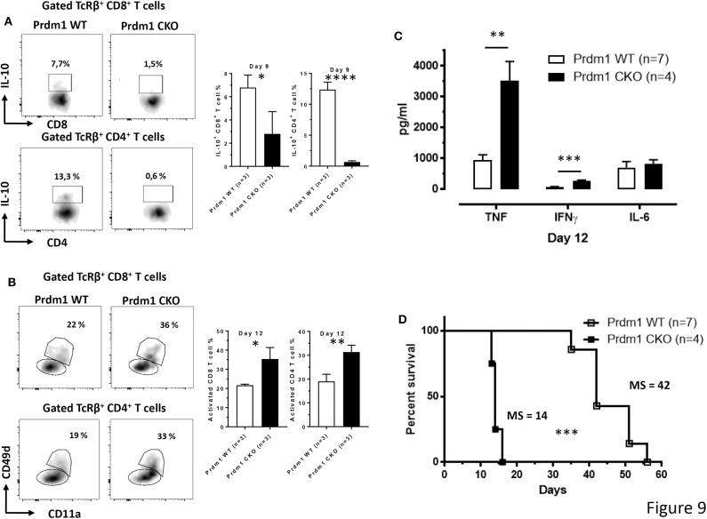 T cell-derived Blimp-1 signaling pathway is required to dampen inflammation following T. brucei infection. (A) Percentage of splenic IL-10 + CD8 + and CD4 + T cell subsets was analyzed at day 9 p.i. both in WT and T cell-specific Prdm1-deficient (Prdm1 CKO) mice following T. brucei infection. (B) The CD11a and CD49d expression on splenic CD8 + and CD4 + T cells were analyzed at day 12 p.i. in WT and T cell-specific Prdm1-deficient (Prdm1 CKO) mice. Data are represented as mean of at least 3 mice per group ± SEM and are representative of 3 independent experiments. (C) Cytokine levels in serum at day 12 p.i. and (D) survival of WT and Prdm1 CKO mice were monitored following T. brucei infection, where the median survival (MS) of each group is indicated in days. Data are represented as mean of at least four mice per group ± SEM, where * p ≤ 0.05, ** p ≤ 0.01, *** p ≤ 0.001, **** p ≤ 0.0001, and are representative of two independent experiments.