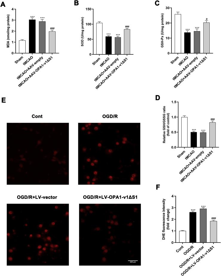 The attenuated cerebral ischemia/reperfusion-induced oxidative stress in vivo and in vitro by OPA1-v1 Δ S1 expression. (A–D) Quantitative results of the levels of MDA(A), SOD(B), GSH-Px(C) and GSH/GSSG ratio(D) in the cortex of different experimental groups; n = 5. Data are expressed as mean ± SEM. One-way analysis of ANOVA with Bonferroni's post hoc test was used,*** p