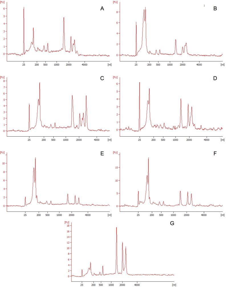 Electropherograms generated by Agilent RNA 6000. Electropherograms generated from total RNA extractions from  Synechococcus sp .  7002  bacterial cells exposed to polyethylene microparticles and nanoparticles after 0, 5 and 10 days. A). Total RNA sample after 0 days exposure to polyethylene microparticles B) Total RNA sample after 0 days exposure to polyethylene nanoparticles C) Total RNA sample after 5 days exposure to polyethylene microparticles D) Total RNA sample after 5 days exposure to polyethylene nanoparticles. E) Total RNA sample after 10 days exposure to polyethylene microparticles F) Total RNA sample after 10 days exposure to polyethylene nanoparticles G) Control sample exposed to 0.1% Tween solution.