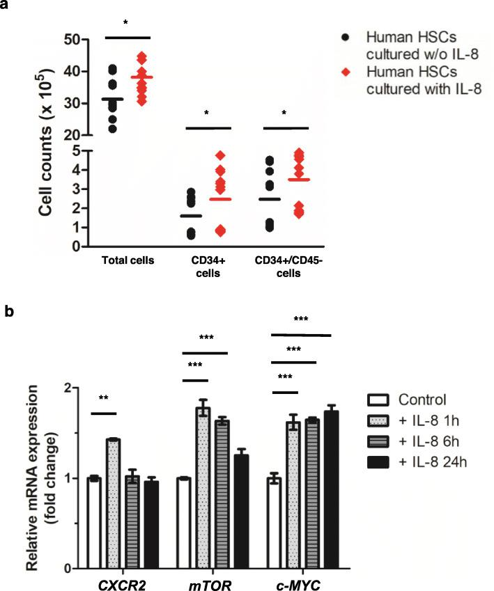 Effects of increased IL-8 levels on hematopoietic <t>stem</t> cells. a Conditioned media was collected from 24-h cultures of healthy hBMSCs grown in <t>mesenchymal</t> stem <t>cell</t> <t>growth</t> <t>medium.</t> Subsequently, 2.5 × 10 6 hHSCs were cultured for 24 h in conditioned media in the presence n = 12) and absence ( n = 12) of IL-8 (100 ng/mL). The numbers of total, CD34+, and CD34+/CD45- cells were significantly higher in the hHSCs cultured in the presence of IL-8, compared to those in cells cultured without IL-8 ( p = 0.014, p = 0.020, and p = 0.039, respectively). b The relative expression of CXCR2 , mTOR , and c- MYC increased at 1 h after IL-8 treatment. The expression of CXCR2 returned to normal after 6 h of IL-8 treatment, and the expression of mTOR gradually decreased at 6 and 24 h after IL-8 treatment. In the case of c -MYC , the increased expression lasted up to 24 h. Each experiment was repeated thrice. Note: *** p