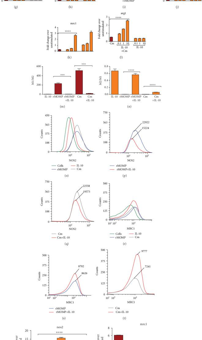 Skewing of the chlamydial M1 pro-inflammatory phenotype to an M2 anti-inflammatory phenotype by exogenous and endogenously produced IL-10. Macrophages (10 6 cells/mL) were stimulated with rMOMP (0.1, 1 and 10 μ g/mL) (A-C) or infected with Cm (MOI of 0.5, 1 and 2) (D-F) in the presence and absence of IL-10 (10 ng/mL). Macrophages were stimulated with rMOMP (1 μ g/mL; G-I) or Cm (MOI of 2; J-L) in the presence and absence of IL-10 (0.1, 1, and 10 ng/mL). At 24 h post-stimulation, the mRNA transcripts of the m1 marker; nos2 and m2 markers; arg1 and mrc1 were quantified using TaqMan qRT-PCR. The m1/m2 (M) and m2/m1 (N) ratios were calculated from macrophages exposed to rMOMP or Cm in the presence and absence of IL-10. Protein expressions of nos2 and mrc1 were evaluated from stimulated cells employing flow cytometry (O-T). Macrophages pre-incubated with neutralizing Abs to IL-10, IL-6, and TNF were stimulated with rMOMP or Cm for an additional 24 h. Normal rat IgG1 Ab served as the isotype control (ISO). Post-stimulation, RNA was isolated to quantify the gene transcripts of nos2 and mrc1 (U-X) by TaqMan qRT-PCR. An asterisk indicates significant differences ( P