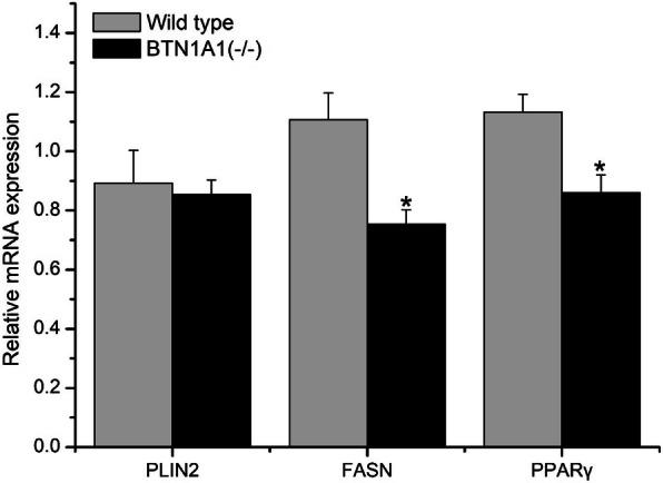 Effect of knockout of BTN1A1 on lipogenic mRNA abundance in bovine mammary epithelial cells (BMEC) ( n = 3). Data are reported as Means ± SE. Total <t>RNA</t> was isolated using <t>TRIzol</t> reagent and the relative abundance of target genes was measured using real-time PCR.WT, wild-type; BTN1A1 (−/−) , BTN1A1 gene knockout cell (* P