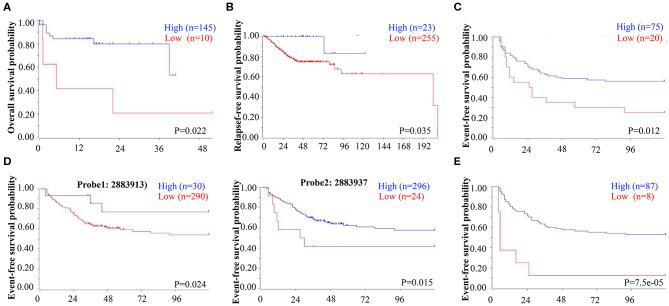 Low EBF1 expression correlates with shorter survival in CRC patients. (A–E) A public clinical microarray dataset from the R2 bioinformatic platform was used to analyze the correlation between EBF1 mRNA expression and overall survival (A) , relapse-free survival (B) , and event-free survival (C–E) of CRC patients.