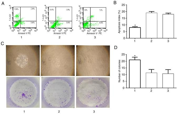 Effect of Siva-1 overexpression on KATO III/VCR cell growth. (A and B) Apoptotic rate in Siva-1 overexpressed-KATO III/VCR cells was analyzed by flow cytometry. (C and D) KATO III/VCR + LV-Siva-1 cells, KATO III/VCR + LV-NC cells and KATO III/VCR cells were plated in 6-well plates at a density of 200 cells/well, after which colony growth was observed under an optical microscope following 14 days (magnification, ×40). The surviving fraction of cells (visible colonies) was stained with gentian violet and counted manually. Data are presented as the mean ± standard deviation from 3 independent experiments. *P