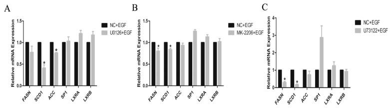Effect of the protein inhibitor on the expressions of genes involved in lipid metabolism in GMECs. ( A ) GMECs were treated with 500 nM MK-2206 (Akt inhibitor) and 50 ng/mL EGF for 24 h, to investigate the mRNA levels of genes involved in lipid metabolism in GMECs. ( B ) GMECs were treated with 10 µM U0126 (MEK inhibitor) and 50 ng/mL EGF for 24 h, to investigate the mRNA levels of genes involved in lipid metabolism in GMECs. ( C ) GMECs were treated with 20 µM U73122 (PLC-γ1 inhibitor) and 50 ng/mL EGF for 24 h, to investigate the mRNA levels of genes involved in lipid metabolism in GMECs. Values are presented as mean ± SD of three independent experiments. * Means p