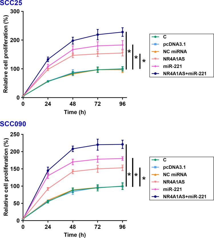 Overexpression of NR4A1AS or/and miR-221 promote the proliferation of OSCC cells. The effects of overexpression of NR4A1AS or/and miR-221 on the proliferation of SCC25 and SCC090 cells were determined by CCK-8 assay. Overexpression of NR4A1AS could significantly increase the proliferation rate of OSCC cells. MiR-221 also had the same effect on the proliferation of OSCC cells, and there was no difference observed between C and NC groups. All experiments were repeated 3 times and mean values were presented and compared. * p