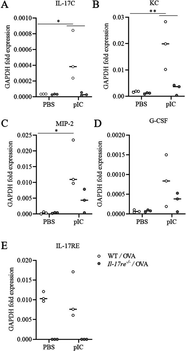 IL-17RE regulates the pIC-induced expression of cytokines in asthmatic mice. Asthmatic WT and Il-17re −/− mice were intranasally treated with 100 μg pIC or PBS as control 2 h after the final OVA challenge and analyzed after 4 h. The lung tissue mRNA expression of IL-17C ( a ), KC ( b ), MIP-2 ( c ), G-CSF ( d ), and IL-17RE ( e ) were measure by semi-quantitative RT-PCR. Data were compared by Two-way ANOVA with Tukey's post-test and are shown as the mean ± SEM. *p