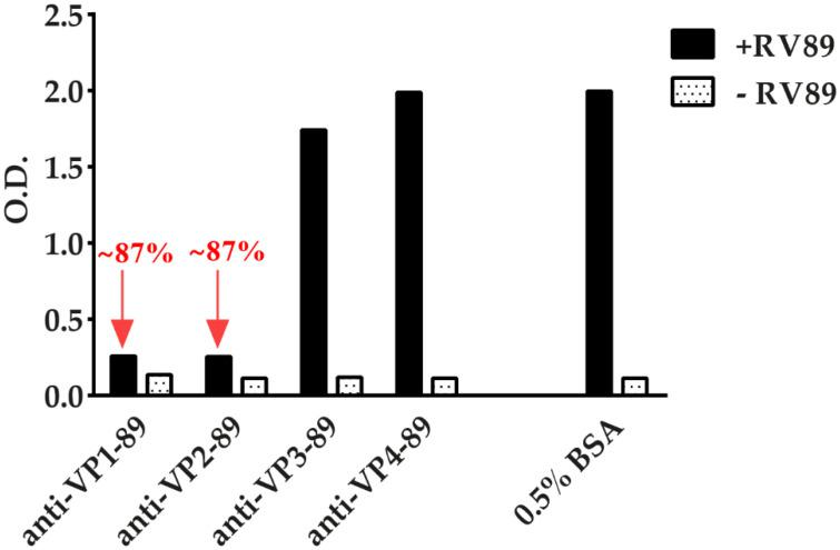 Inhibition of RV89 binding to <t>ICAM-1</t> by antibodies specific for each of the four viral capsid proteins (VP). Binding of RV89 to ICAM-1 after pre-incubation of virus with antibodies against VP1, VP2, VP3, and VP4 compared to pre-incubation with buffer containing BSA only reported as O.D. (y-axes). The inhibitions of RV89 binding by anti-VP1 and anti-VP2 antibodies are indicated by red arrows. Omission of RV89 served as a negative control. The results are means of duplicate determinations with a variation of less than 10%. Inhibition experiments were performed three times.