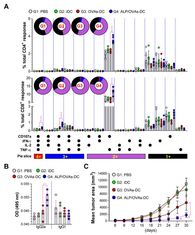 Immunization with ALP-treated DCs induces a robust anti-tumor effect and immunity. ( A ) Two weeks after the final immunization, single cells obtained from PBS-, iDC-, OVAs-DC-, and ALP/OVAs-DC-immunized mice were stimulated ex vivo with OVA peptides for 6 h. The percentage of OVA-specific CD3 + CD4 + and CD3 + CD8 + T cells producing CD107a, <t>IFN-γ,</t> IL-2, or TNF-α was analyzed in accord with the gating strategy described in Figure S1 ( Supplementary Materials ). Pie charts indicate the mean frequencies of CD4 + and CD8 + T cells co-expressing IFN-γ, TNF-α, IL-2, and CD107a. ( B ) Serum samples were analyzed using ELISA for OVA 323–339 -specific IgG2a and IgG1 antibodies in each immunized mouse. The mean ± SD ( n = 6 mice/group) shown are representative of 2 independent experiments. ( C ) Tumor volumes in mice ( n = 10 mice/group) that received PBS (G1: white solid dot), iDC (G2: green solid dot), OVAs-DC (G3: red solid dot), and ALP/OVA-DCs (G4: blue solid dot) vs. E.G7. Tumor growth was identified by calculating the diameter of the tumor every 3 days for 30 days. The mean ± SD shown are representative of 2 independent experiments. SD; standard deviation.