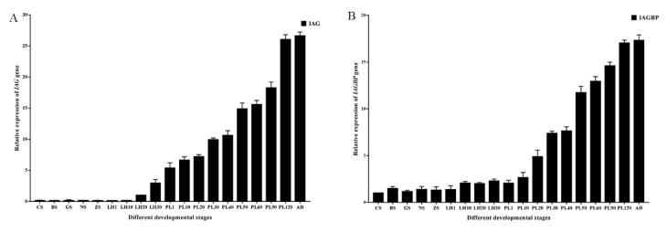 Transcriptional levels of Mr-IAG ( A ) and Mr-IAGBP ( B ) at different developmental stages, revealed by qRT-PCR. Mr-IAG and Mr-IAGBP mRNA levels were normalized to β-actin. qRT-PCR data are shown as means ± SE (standard error). CS, cleavage stage; BS, blastula stage; GS, gastrula stage; NS, nauplius stage; ZS, zoea stage; LH1, first-day larva after hatching; LH10, fifth-day larva after hatching; PL1, first-day post-larval stage; PL10, 10th-day post-larval stage; PL20, 20th-day post-larval stage; PL30, 30th-day post-larval stage; PL50, 50th-day post-larval stage; AD, adult stage.