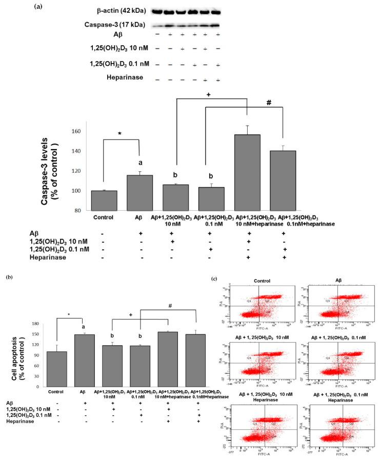 Effects of 1,25(OH) 2 D 3 on Aβ-induced changes in cell apoptosis. ( a ) Western blot analysis of caspase-3 protein expression in SH-SY5Y cells. ( b ) Percentages of apoptotic cells in each group quantified from ( c ). ( c ) Representative profiles of cell apoptosis detected by flow cytometry with Annexin V/propidium iodide double-staining. SH-SY5Y cells were incubated with 1 μM Aβ(25-35) prior to the addition of 0.1 and 10 nM 1,25(OH) 2 D 3 with or without heparinase III for 24 h. Data are presented as the mean ± SD of three experiments and each experiment included triplicate repeats. * ,+,# Significantly differs between the two groups (statistical analysis was performed using Student's t test). Bars of Aβ, Aβ + 0.1 nM 1,25(OH) 2 D 3 , and Aβ + 10 nM 1,25(OH) 2 D 3 with different letters significantly differ ( p