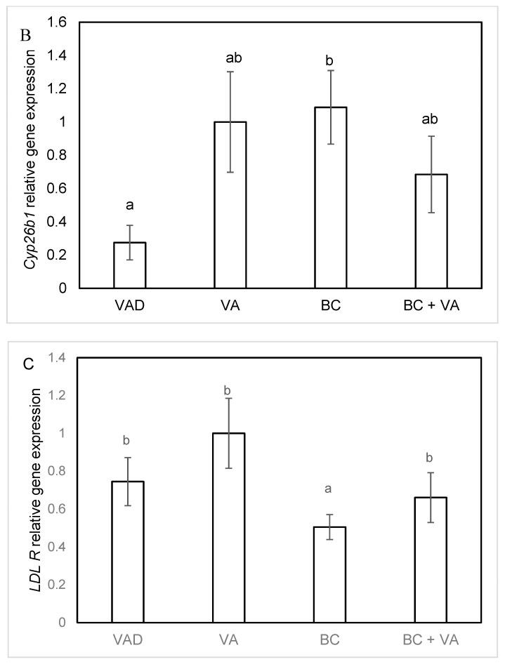 Liver gene expression of CYP26A1 ( A ) CYP26B1 ( B ) and LDL R ( C ) in apoE −/− mice, fed with VAD diet, VA, BC or BC+VA. Liver mRNA levels of the indicated genes were detected by real-time PCR. GAPDH was used as a reference gene. Data are means ±SE, n = 5–8 in each group. Mean values (a,b) not sharing a common superscript were significantly different by one-way ANOVA and Tukey post-hoc test comparison ( p