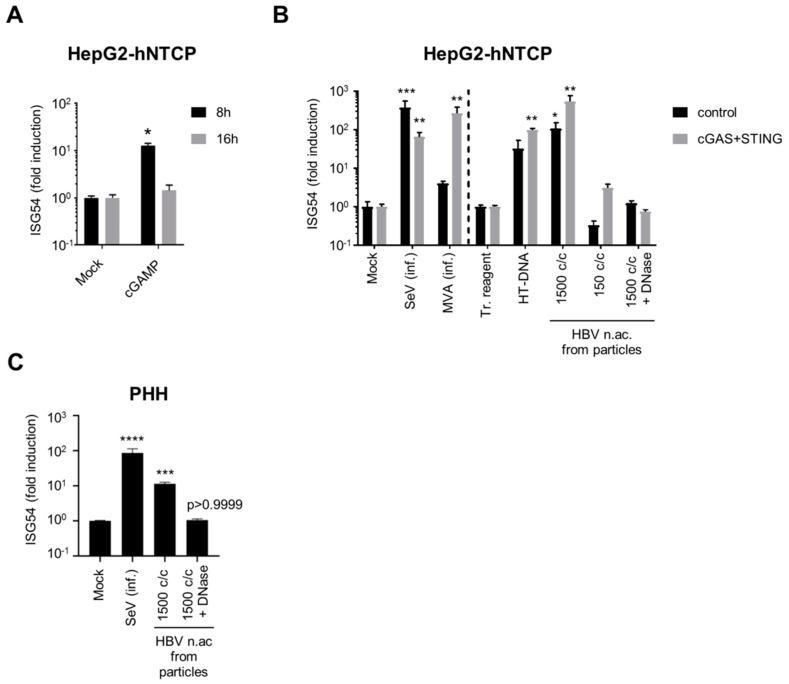 Hepatocytes respond to foreign DNA. HepG2-hNTCP ( A ), HepG2-hNTCP-control or -cGAS/STING ( B ) or PHH ( C ) were stimulated with cGAMP (A), infected (inf.) with SeV or MVA-gfp, or transfected with HT-DNA or HBV nucleic acids (c/c: copies/cells) ( B , C ). ISG54 mRNA fold inductions to mock ( A , B left part, C ) or to transfection reagent-treated cells (tr. reagent) ( B , right part) was determined by RT-qPCR. Average and SEM of 4 ( A ), 2 ( B ) independent experiments in triplicates or of 4 donors in duplicates ( C ). Levels of significance compared to respective controls ( A , B left part, C : mock; B , right part: transfection reagent-treated cells): **** p