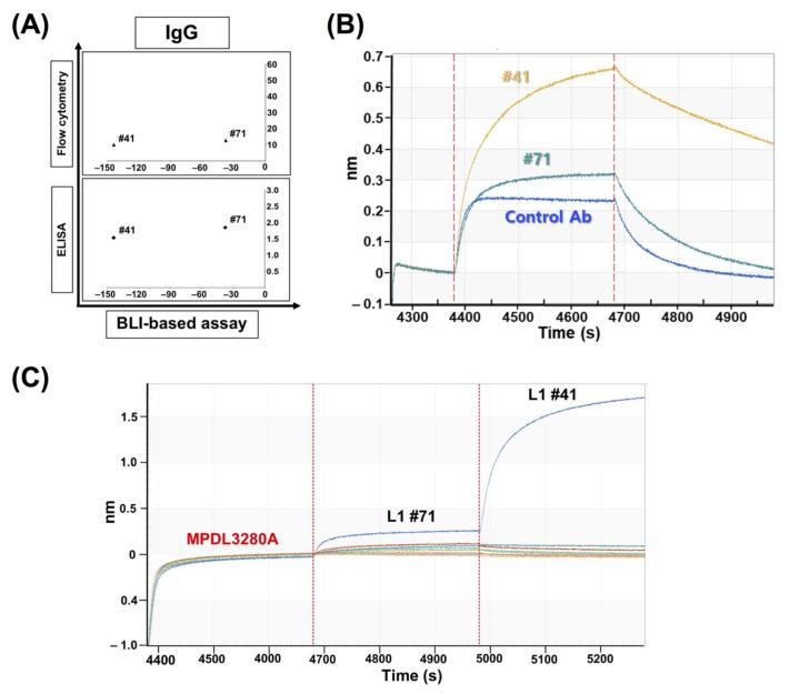 The application of the BLI-based assay for epitope characterization of antibodies. ( A ) Classification and assessment of abnormal binding sensorgrams in BLI-based PD-1/PD-L1-binding inhibition assays. In the assay, PD-1 is coated on the sensor and a mixture of PD-L1 and each IgG antibody clone was incubated with the sensor; ( B ) Distribution of #41 (‒144%) and #71 (‒37.63%) clones in BLI-based assays using IgG; ( C ) Binding compatibility test using the BLI assay. The PD-L1-coated sensors were pre-saturated with MPDL3280A antibody binding and two antibodies were introduced to the sensors consecutively to check if any clone has compatible binding with MPDL3280A (tested clones: #3, 6, 10, 24, 26, 29, 35, 40, 41, 50, 51, 52, 56, 63, 70, 71).