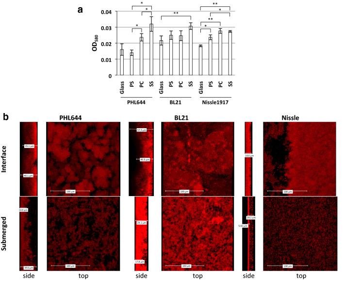 Comparison of biofilm formation by three strains (PHL644, BL21 and Nissle 1917) on different substrates. The 6-well plate method was used to compare biofilm formation in M63+ medium on glass, polystyrene (PS), polycarbonate (PC) and stainless steel (SS) coupons. After 3 days, crystal violet staining was used to quantify biofilm formation ( a ). Data shown are the mean ± standard deviation of 3 independent coupons. Significance was determined using a paired two-tailed T -test: * p