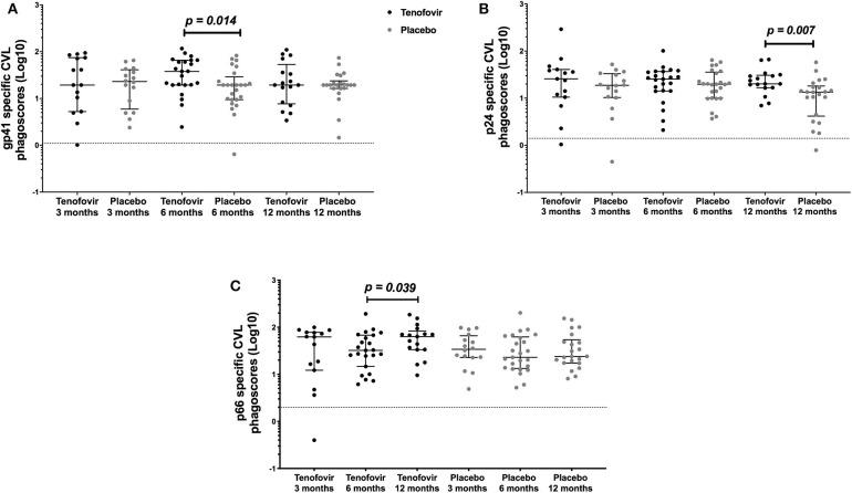 HIV-specific ADNP [phagoscores (Log10)] in the genital tract (CVL) in women from the tenofovir and placebo arms. Cross-sectional analyses between the tenofovir and placebo arms to HIV proteins (A) gp41 and (B) p24 and longitudinal analyses for tenofovir and placebo (C) p66. Solid lines indicate the minimum and maximum values of box and whisker plots, with black solid lines across the dots indicate the median at each time point for each study arm. Wilcoxon signed-rank test was used to analyse ADNP activity over time and Wilcoxon-Mann-Whitney test was used for cross sectional analysis. Statistically significant values were defined as p