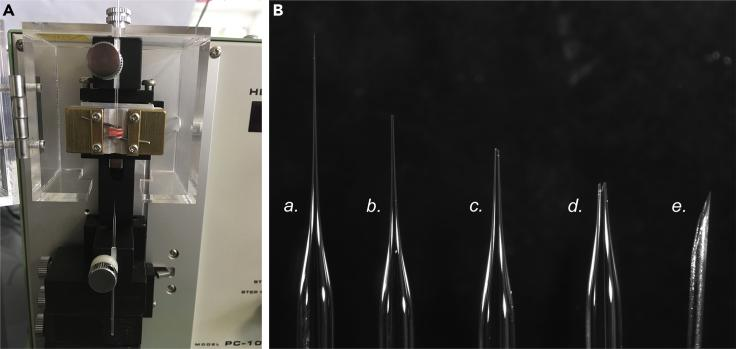 Preparation of Microcapillaries for Plasmid Injection (A and B) (A) Use of the Narishige <t>PC-10</t> glass pipette puller. Result can be seen in (B): unbroken pipette after pulling (a.). Pipette tip can be broken with a gentle finger push on the glass tip. Pipette break must be clean and narrow to ensure appropriate plasmid injection with minimum damage to brain structures (b.). In some instances a broader aperture might be better suited when using more viscous DNA solutions (c.). Too wide and/or not sharp breakage should be avoided for they induce too much brain damage (d.). Tip of a 27 gauge needle for scale (e.).