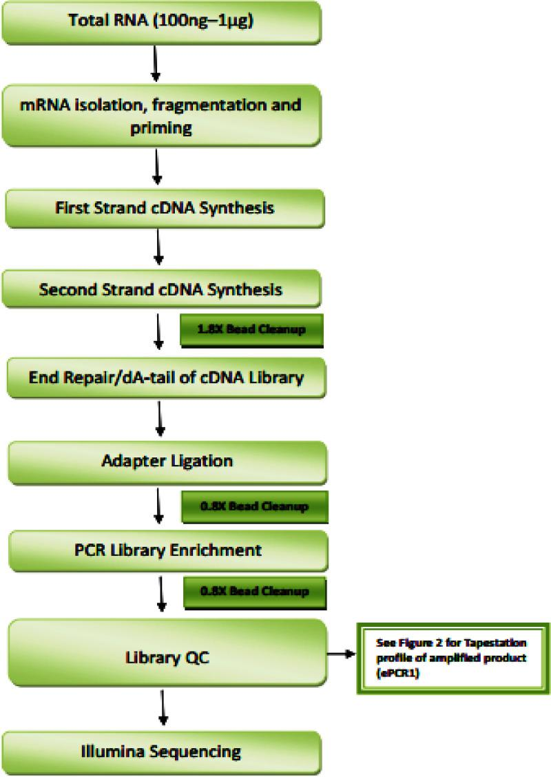 Schematic work flow of library preparation and sequencing using NEBNext Ultra Directional RNA Library Preparation kit.