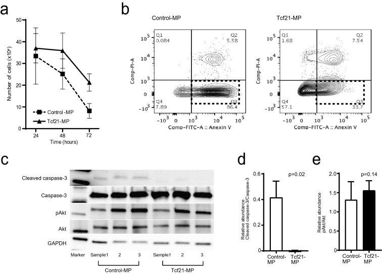 Anti-apoptotic effect of Tcf21 -expressing murine podocyte cell line using ADR stimulation. a Tcf21-MPs could significantly survive at 48 (p = 0.04) and 72hrs (p