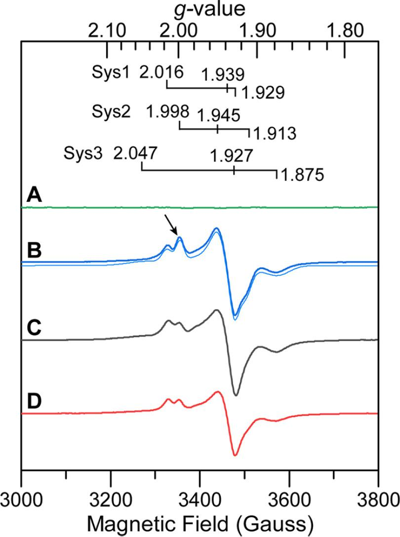 Continuous-wave X-band EPR of HoxEFU prepared under different reduction-oxidation conditions. A as purified. B , dark blue line , reduced with 20 m m DT; light blue line , simulated spectra with the individual spin systems (Sys) specified above. C, reduced with 10 m m NADH. D, reduced with 10 m m NADPH. For all samples, HoxEFU (50 μ m ) was prepared in Tris buffer at pH 8.3. The EPR spectra were collected at 15K and 1 mW microwave power.