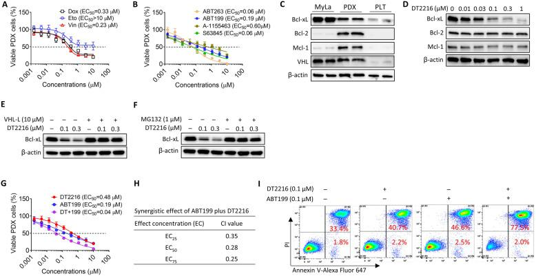 DT2216 can synergistically kill TCL PDX cells in combination with ABT199 in vitro . a The viability of DFTL-28776 PDX cells was determined 24 h after doxorubicin (Dox), etoposide (Eto), or vincristine (Vin) treatment. EC 50 , half maximal effective concentration. The data presented are mean ± SD ( n = 2 independent assays, with 3 replicates in each assay). b The viability of DFTL-28776 PDX cells was determined 24 h after ABT263, ABT199, A-1155463, or S63845 treatment. The data presented are mean ± SD ( n = 2 independent assays, with 3 replicates in each assay). c Bcl-xL, Bcl-2, Mcl-1, and VHL expressions in MyLa cells, DFTL-28776 PDX cells, and PLT. d DT2216 degraded Bcl-xL in DFTL-28776 PDX cells after treatment with indicated concentrations of DT2216 for 16 h. e VHL ligand (VHL-L) pretreatment blocked the degradation of Bcl-xL induced by DT2216 in DFTL-28776 PDX cells. The PDX cells were pretreated with 10 μM VHL-L for 2 h, and then treated with indicated concentrations of DT2216 for 16 h. f Proteasome inhibition with MG132 blocked the degradation of Bcl-xL induced by DT2216 in DFTL-28776 PDX cells. The PDX cells were pretreated with 1 μM MG-132 for 2 h and then treated with the indicated concentrations of DT2216 for 16 h. g The viability of DFTL-28776 PDX cells was determined 24 h after treatment with DT2216, ABT199, or DT2216 plus ABT199 (DT+199 at a ratio of 1:1). The data presented are mean ± SD ( n = 2 independent assays, with 3 replicates in each assay). h The combination index (CI) values of DT+199 group at EC 25 , EC 50 , and EC 75 , values calculated from the data presented in g are presented. i Combination of DT2216 with ABT199 induced apoptosis in PDX cells. Apoptosis was assayed after treatment with 0.1 μM DT2216, 0.1 μM ABT199, or combination of 0.1 μM DT2216 with 0.1 μM ABT199 for 24 h. PI, propidium iodide