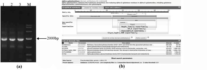 Gel electrophoresis of PCR products of α-gal gene. (a) (lane 1–3 represent PCR products of α-gal gene, M represents DNA Marker DL2000) and amino acid sequences analysis of AglB by BLASTn.