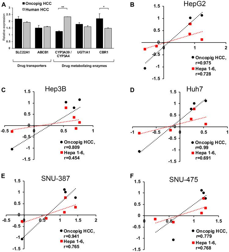 Oncopig, human, and murine HCC in vitro chemotherapeutic susceptibility. ( A ) Gene expression levels in Oncopig ( n = 3 cell lines) and human HCC cells (HepG2, Huh7, and Hep3B). ( B – F ) Correlation analysis of logIC 50 values demonstrating more similar in vitro chemotherapeutic responses between Oncopig and human compared to murine Hepa1-6 and human HCC cells. Chemotherapeutic response of each HCC cell line towards sorafenib, doxorubicin, cisplatin, mitomycin C, and 5-FU was determined. Pearson correlation between logIC 50 in Oncopig HCC cells or murine Hepa1-6 cells and the following human HCC cells was analyzed: (B) HepG2, (C) Hep3B, (D) Huh7, (E) SNU-387, and (F) SNU-475. * denotes P