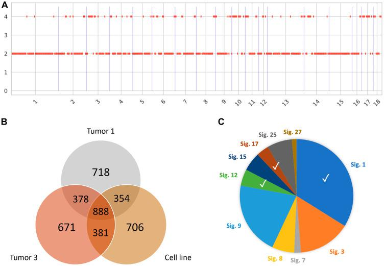 Genomic signatures of Oncopig HCC. ( A ) Somatic copy-number calling reveals a largely copy-neutral tumor in line with the young age of the tumor. ( B ) Representative venn diagram showing distribution of SNVs in the cell line and 2 out of 5 tumor samples. ( C ) Mutational signatures identified resemble signatures observed in human HCC tumors (Signatures 1, 12, and 17).