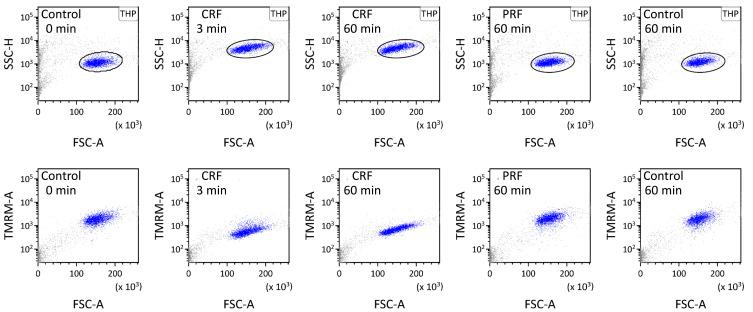 Suspension of THP-1 cells applied with or without RF current was analyzed using flow cytometry. THP-1 cells were gated by a circle in the FSC-A/SSC-H plot and dotted in blue. Fluorescence related to TMRM was measured by setting excitation with a 488-nm blue laser beam and detection through a 585/42-nm bandpass filter.