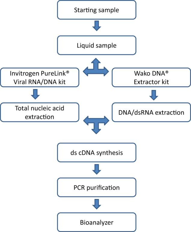 General overview of viral nucleic acid extraction protocol. cDNA complementary DNA, ds double-stranded, PCR polymerase chain reaction.