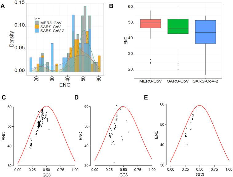 ENc values and ENc-GC3 plots of CDS sequences of human respiratory coronaviruses. A- Distribution of the ENc of CDS sequences of MERS-CoV, SARS-CoV and SARS-CoV-2. B- Boxplot of ENC values of CDS sequences of MERS-CoV, SARS-CoV and SARS-CoV-2. C- ENc-GC3 plot of CDS sequences of MERS-CoV. D- ENc-GC3 plot of CDS sequences of SARS-CoV. E- ENc-GC3 plot of CDS sequences of SARS-CoV-2.