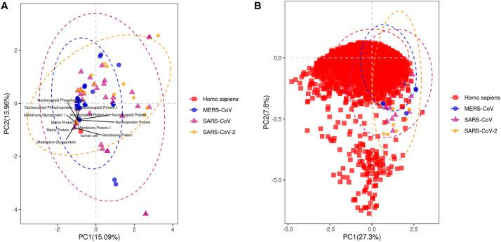 PCA analysis of the CDS sequences of human coronaviruses based on RSCU values. A- PCA based on MERS-CoV, SARS-CoV and SARS-CoV-2 CDS sequences and human cell; genes showing high similarity with human cell were visualized on the plot. B- PCA based on MERS-CoV, SARS-CoV and SARS-CoV-2 CDS sequences and human cell CDS sequences.